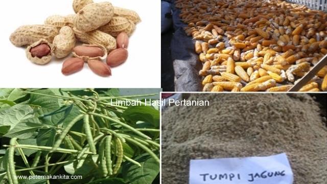 manfaat-limbah-pertanian-untuk-pakan-ternak