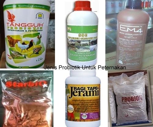 manfaat probiitik untuk ternak
