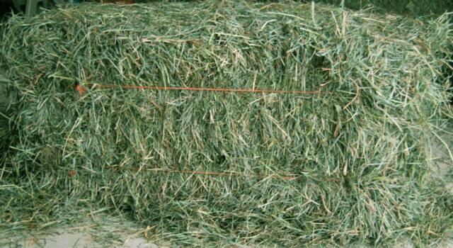 cara membuat hay