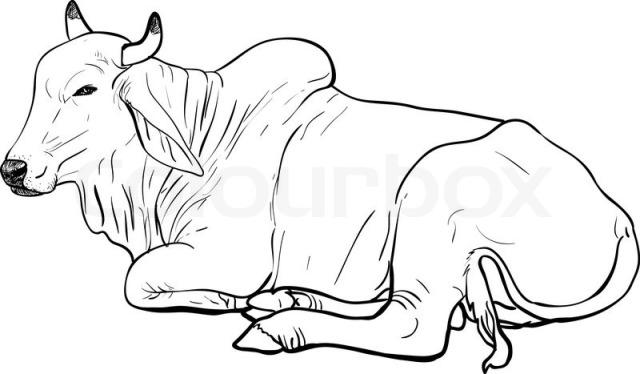 Analisis usaha penggemukan sapi potong