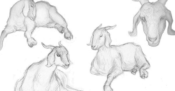 penyakit kejang pada kambing