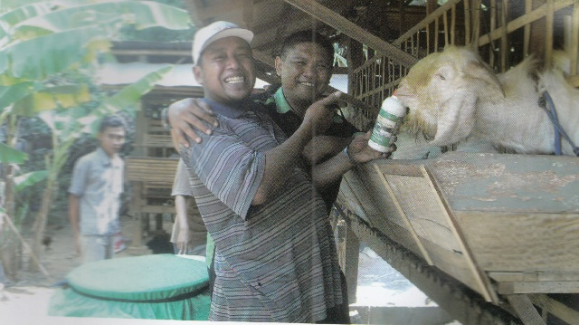 madsudi peternak kambing