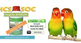 Cara Penggunaan SOC untuk Burung Lovebird