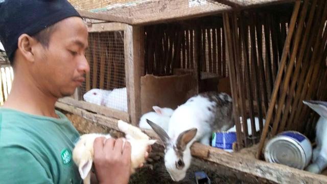 cara ternak kelinci dengan soc