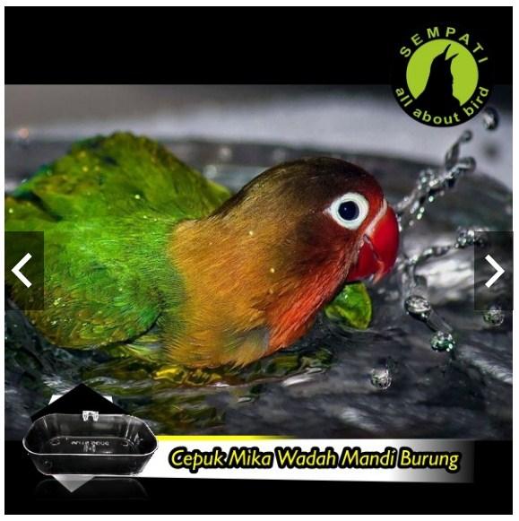 jual cepuk wadah mandi burunglovebird 3
