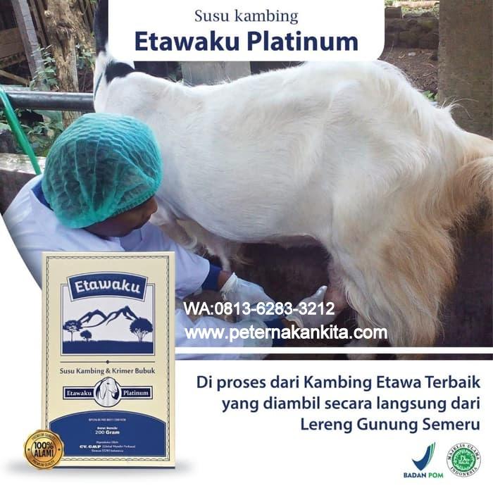 jual kambing etawaku platinum