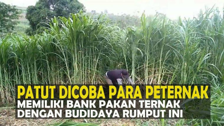 bank pakan untuk ternak